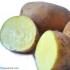 Patata Nueva Amarilla
